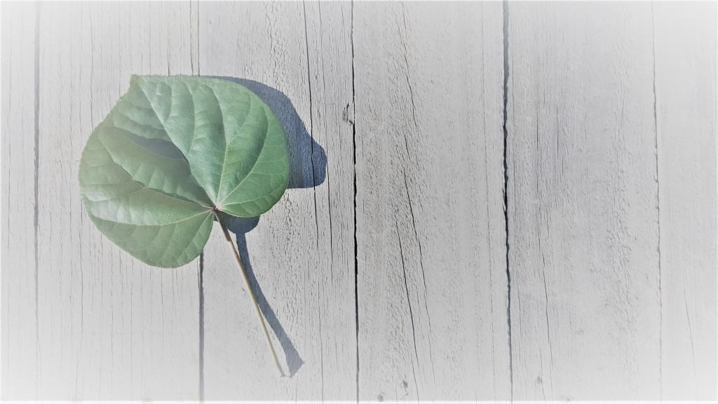 Heart shaped leaf in a Wood Deck