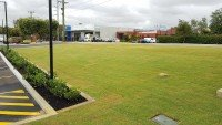 Lawn Laying and Installation near Road and Parking Space