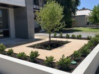 Green Plants for Outdoor Landscaping Ideas