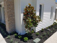 Small Tree with green plants for Outdoor Landscaping